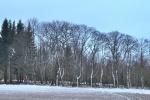 Wald auf dem Kirchberg