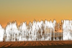 Wald am Ackerrand