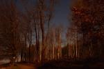 Birken im Mondlicht unter Sternen